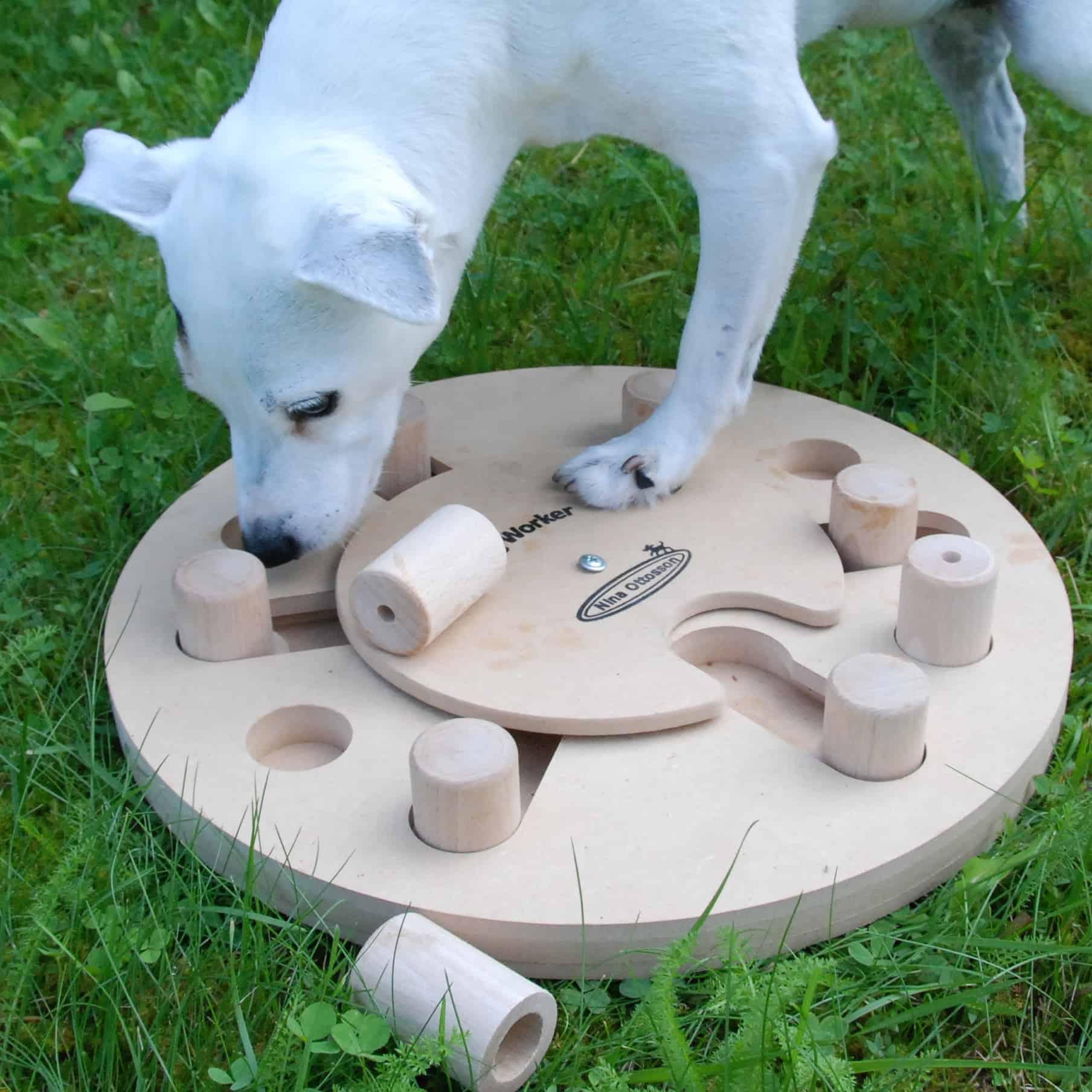 Chien qui cherche nourriture dans un puzzle pour chien